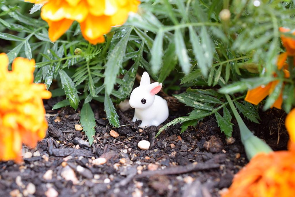 bunny-2